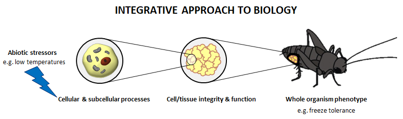 Image showing that stress can affect insects at all biological levels of organization, from cells to tissues to the whole animal